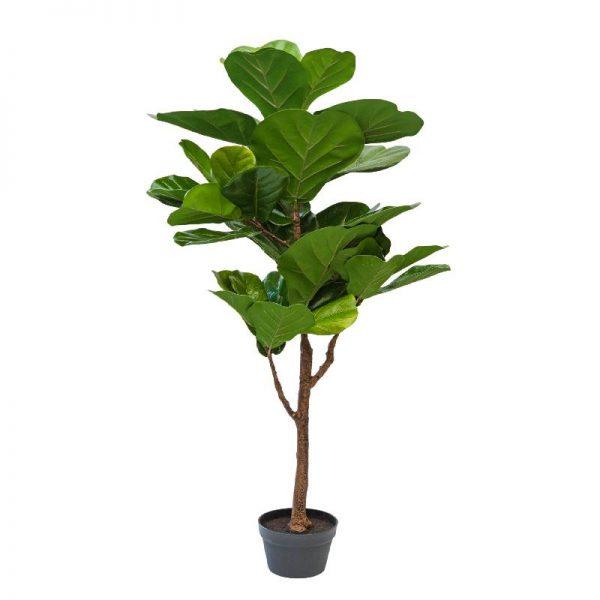 Декоративно смокиново дръвче, 2 размера