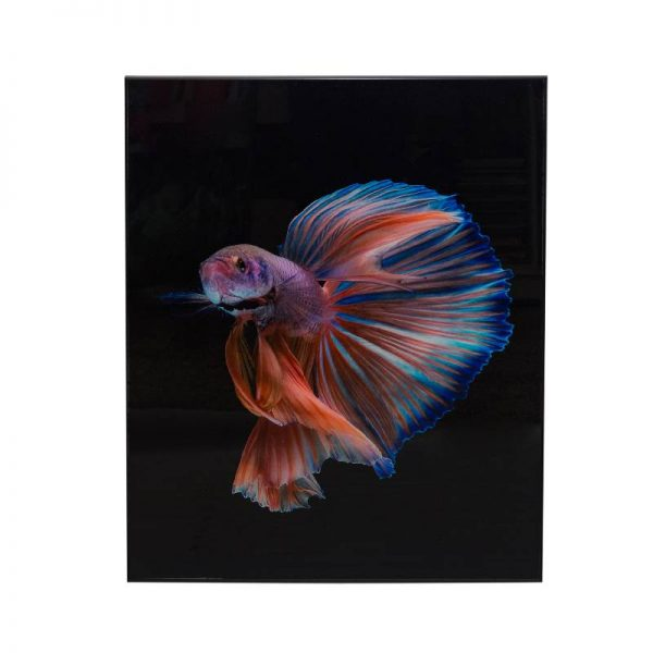 Картина стъкло, риба Бета, 60*80 см