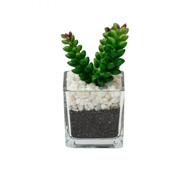 Изкуствено растение в стъклена кашпа, 6*6*13см