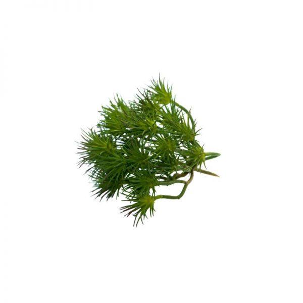 Изкуствено растение с разклонения