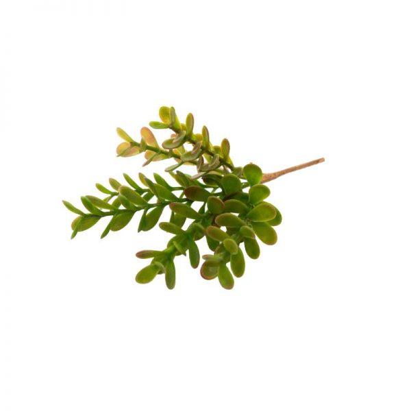 Изкуствено зелено сукулентно растение